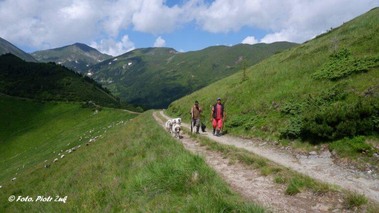 Rumunia. Góry Rodniańskie. Ineu