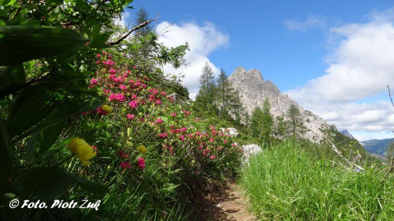 Alpy Karnickie. Monte Lastroni
