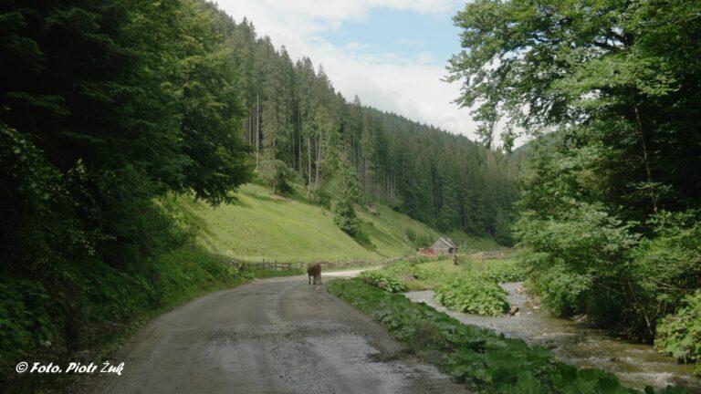 Rumunia. Wokół Gór Rodniańskich